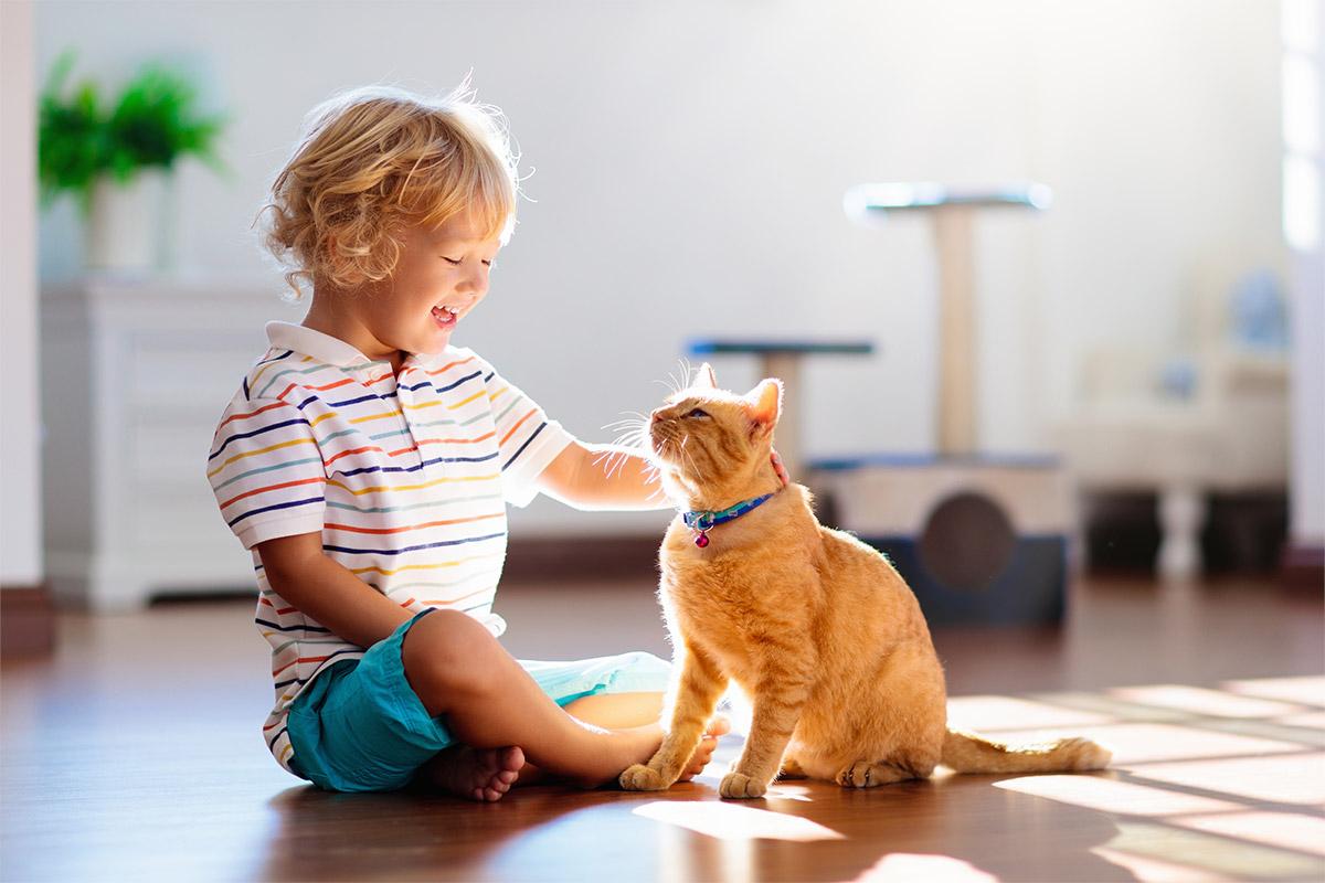 Animais de estimação: como tornar o ambiente mais agradável aos pets?